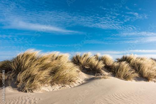 Leinwandbild Motiv Düne an der Ostsee