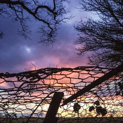 Sunset through a broken fence