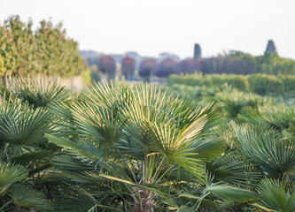 natural outdoor nursery of ornamental plants