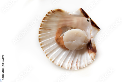 Fresh opened scallop