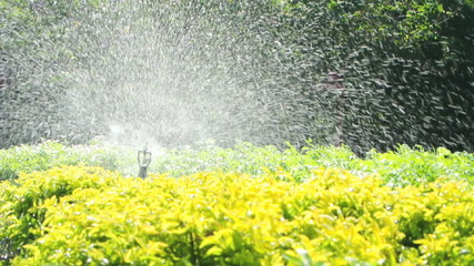 Sprinkler head watering in the garden, full HD.