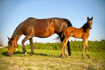 Horses outdoors in summer