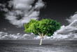 Tree - 75661317