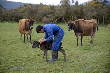 helping the newborn