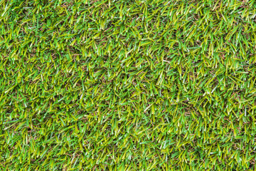 closeup of the green grass