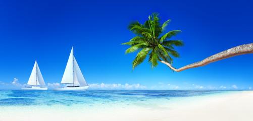 Yacht Beach Blue Sky Palm Tree Leisure Concept