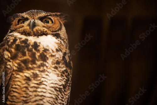 Plexiglas Uil Tiger Owl