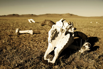 Animal Bones Preserved In A Open Field Of Desert