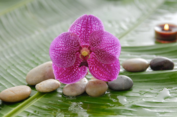 pink orchid and stones, candle on wet banana leaf