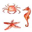 Watercolor sea creatures: crab, starfish, sea horse - 75673551