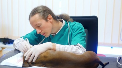 HD - Veterinarian at work