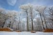 canvas print picture - Winterwald
