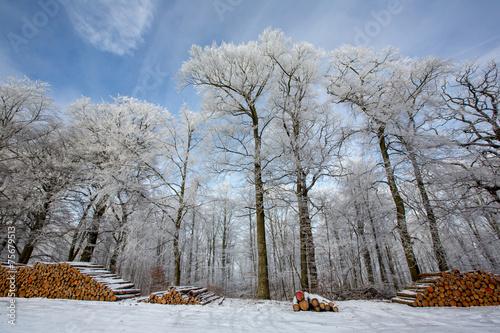 canvas print picture Winterwald