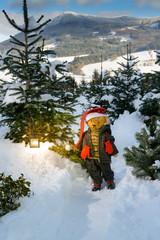 Weihnachtsteddy im Christbaumwald