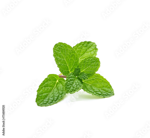 Fresh mint leaves isolated on white background - 75684928