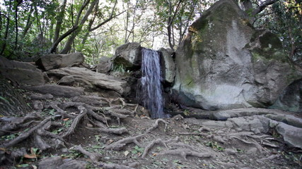 Small falls in  wood, in foreground huge roots of old tre