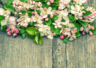 apple tree flowers on wooden background