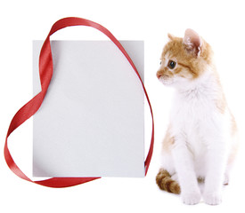 Little kitten with empty greeting card isolated on white