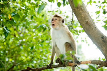 Surprised monkey siting on the tree
