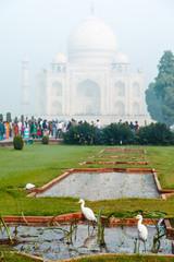 White herons in front of Taj-Mahal Palace