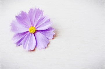 flower purple  - illustration based on own photo image