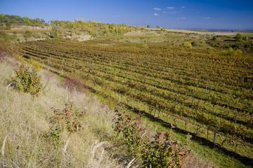 vineyards, Czech Republic