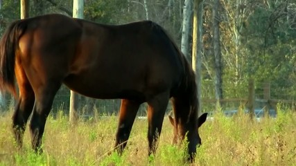 brown horse grazing along grass on farm
