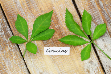 Gracias card (thank you in Spanish) with two green leaves