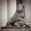 Lion - 75703511