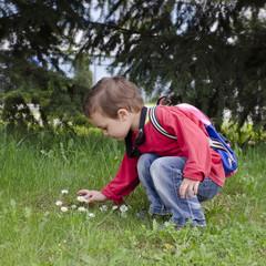 Child picking daisy flowers