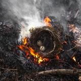 Nature destruction poster