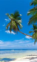 Palms Leaves Garden