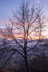 albero al tramonto 2
