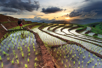 Rice fields on terraced at Chiang Mai, Thailand