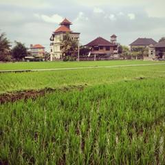 campos de arroz en indonesia