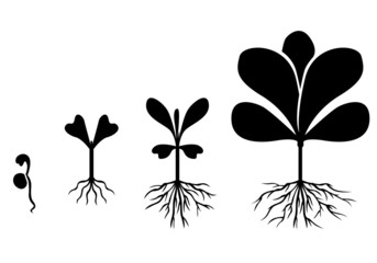 Set of silhouette plants