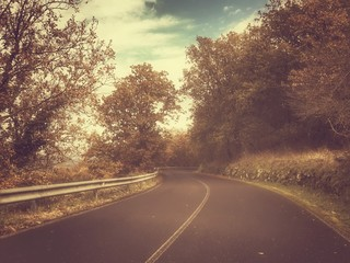 Strada con alberi vintage