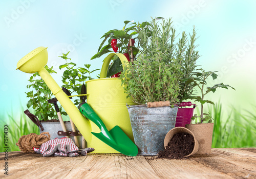 canvas print picture Outdoor gardening tools and herbs