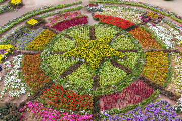 various flower on garden pubic