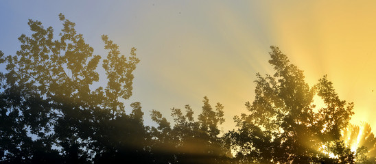 Sun's rays through the foliage