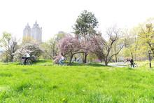 壁紙(ウォールミューラル) - 新緑のセントラルパーク