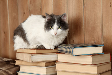Cute cat sitting on books