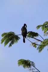 Anhinga bird standing on a tree