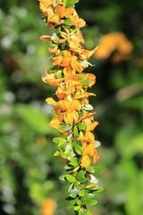 Fairchild Gardens - Orange Flower blooming
