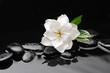 white flower  on black stones background