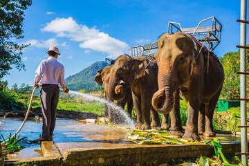 the farm of elephants not far from Dalat