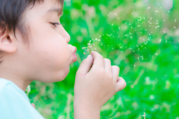 Little boy blow flower floating to the air in the garden
