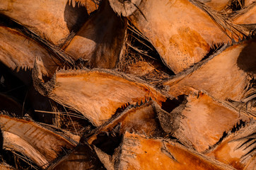 Macro of a Palm Tree Trunk