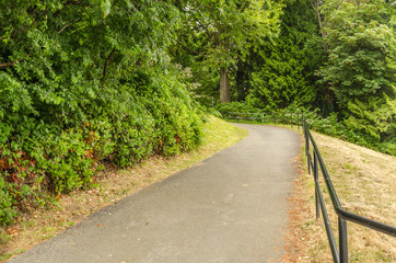 Forest Paved Path