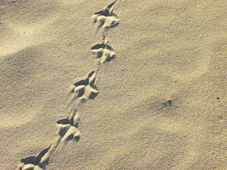 Bird footprints in the sand of a beach
